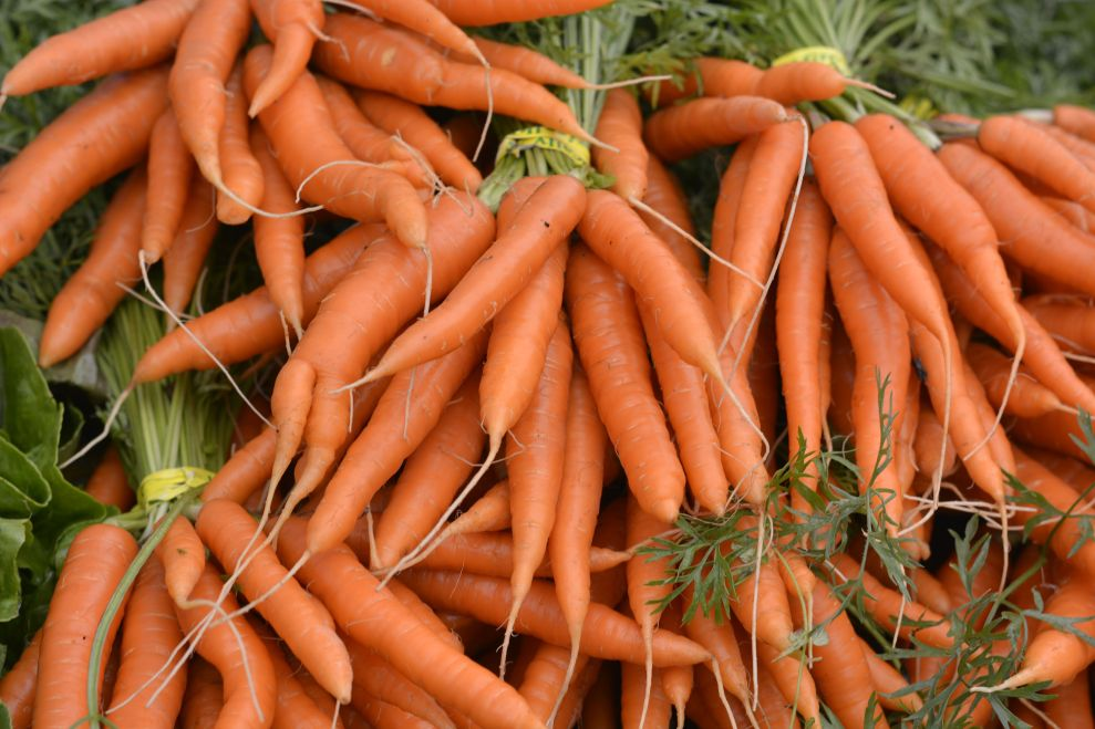 Bunches of carrots, with tops, in a pile