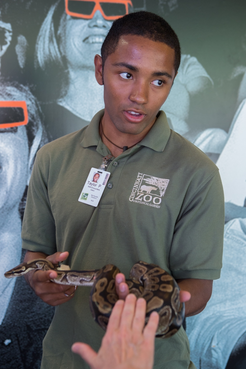 A young man wearing a Cincinnati Zoo uniform shirt and ID holds a snake.