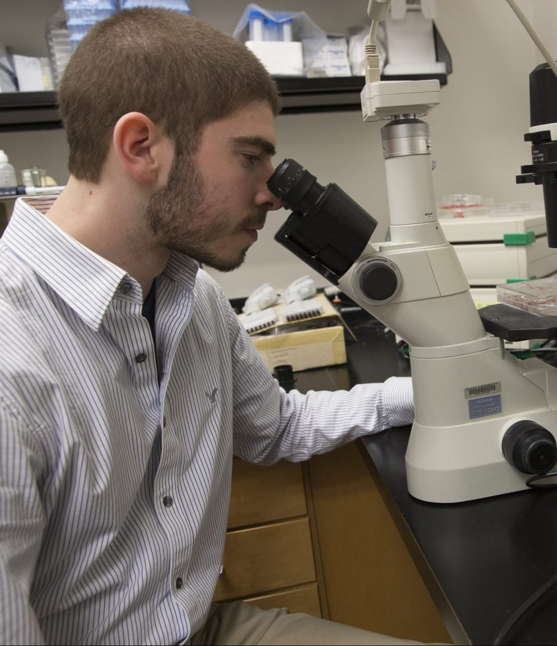 A student researcher looks into a microscope.
