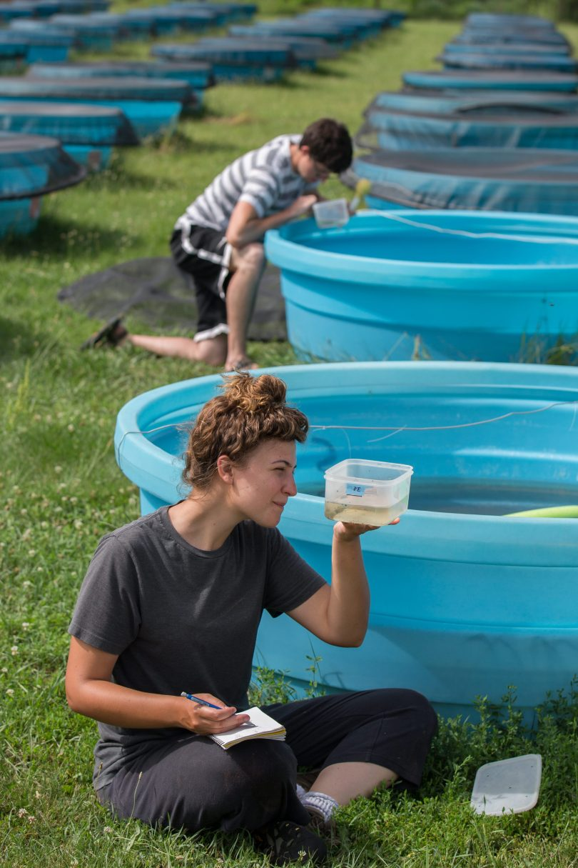 Students examine and take notes on samples from pools at Miami University's Ecology Research Center.
