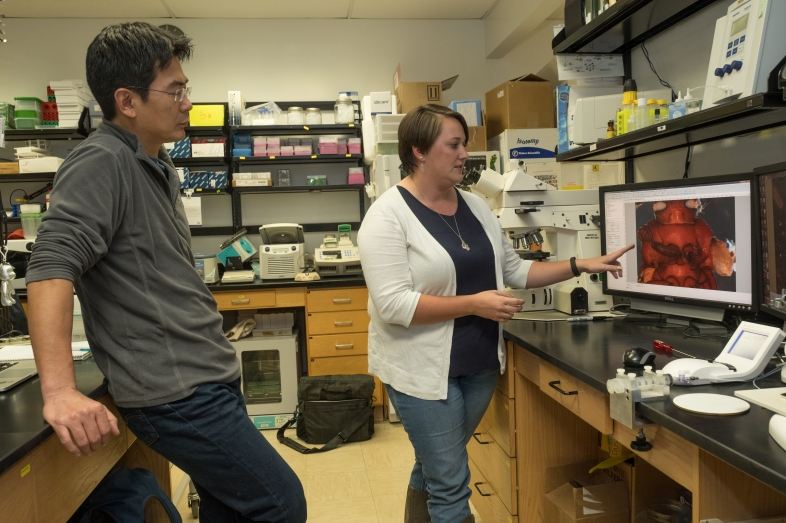 Yoshi Tomoyasu and Courtney Clark-Hachtel look at an image of a beetle on a computer monitor in Tomoyasu's lab.