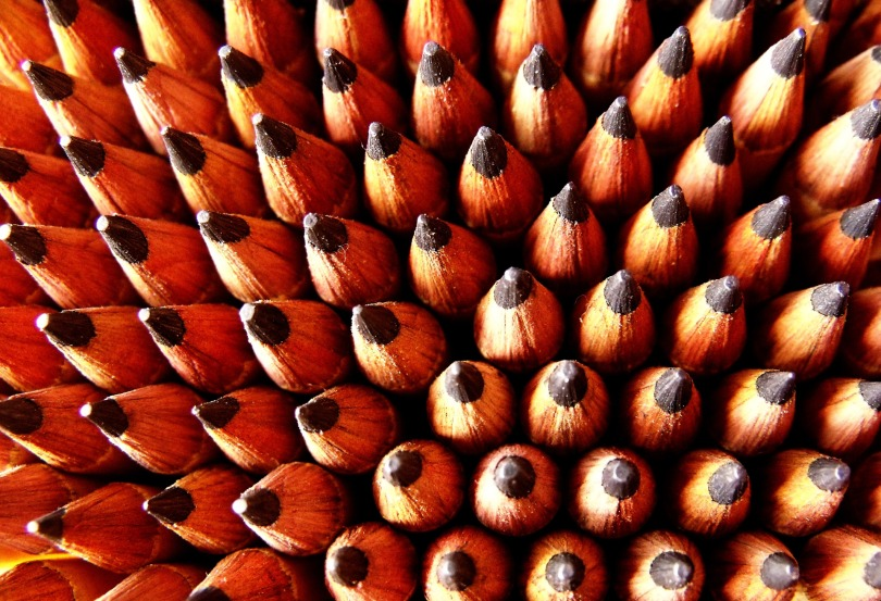 Rows of pencils standing on their ends, with their points facing up, toward the camera.