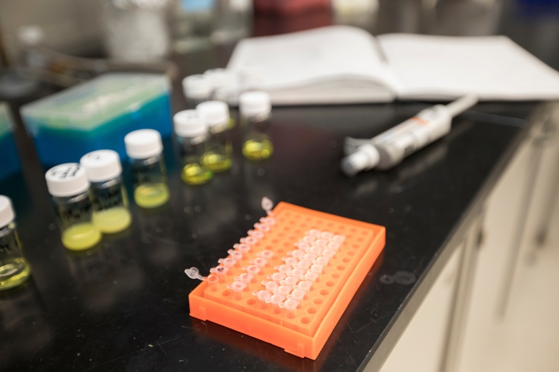 Samples from a lab experiment sit on a lab bench.