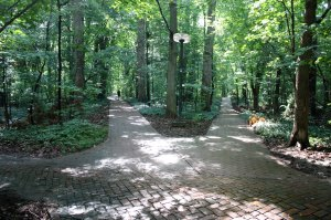Two brick-paved paths diverge in a wood.